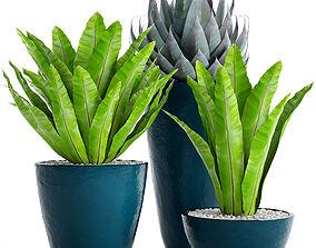 Plants collection asplenium pot 3D model