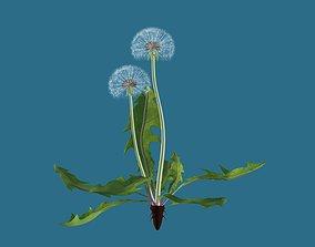 Dandelion 3D