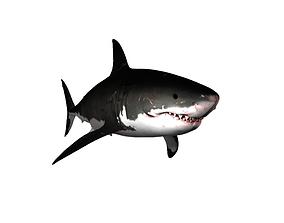 Great White Shark sea 3D model