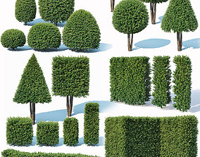 Taxus Baccata topiary Mega Collection 32 3D