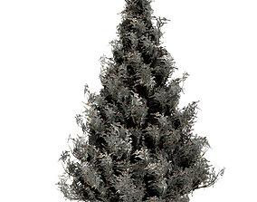 3D Spruce Tree Snow