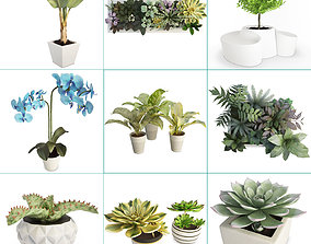 Plants and Flowers Collection 3D