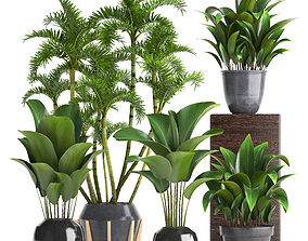 ornamental Collection Exotic plants 3D