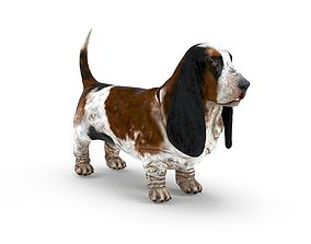 Basset Hound game-ready