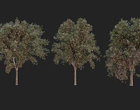 bark 3D model Tree Pack