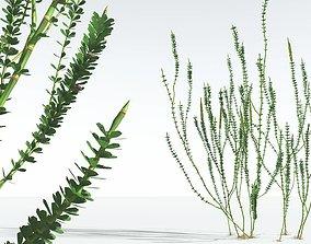 EVERYPlant Hollow-Stemmed Sphenophyllum 11 --16 Models--