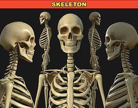3D model anatomy Human Skeleton