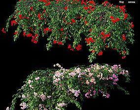 Rose plant set 31 3D model