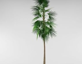 3D Palm tree palmtree