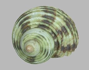 Single seashell photoscan 18 3D model