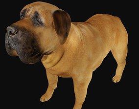3D asset Mastiff