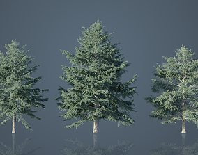 Deodar Cedar Trees 3D model