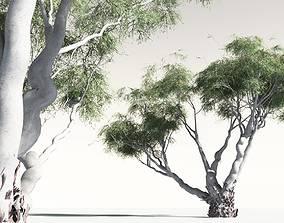 EVERYPlant River Red Gum 06 -- 6 Models 3D