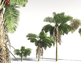 EVERYPlant African Oil Palm 07 -- 10 Models 3D palm