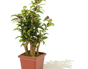 3D model Indoor Potted Plant
