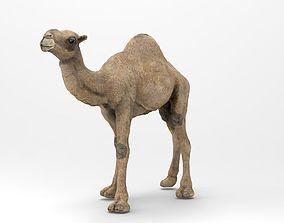 Camel dromedary 3D model