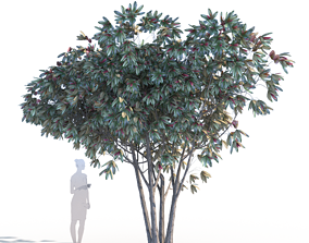 Bronze loquat eriobotrya deflexa multi 3D PBR