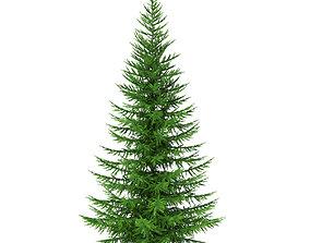 3D model Norway Spruce Picea abies 5m
