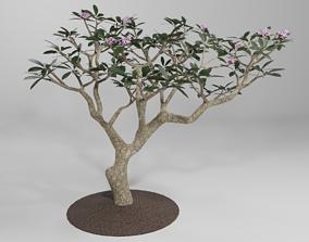 Plumeria Plant 3D model