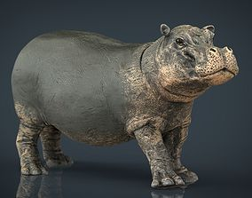 3D asset Hippopotamus with mouth closed