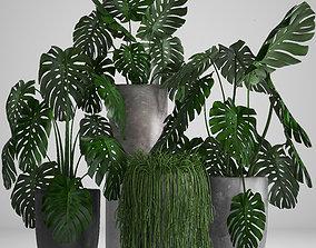 3D bush Collection Exotic plants