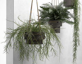 3D model Hanging Pots with Plants