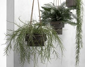Hanging Pots with Plants 3D model