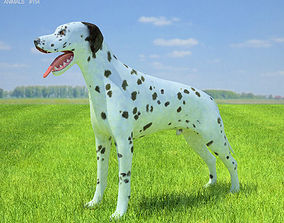 Dalmatian 3D