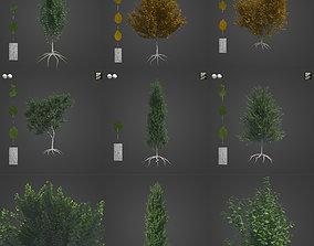 2021 PBR White Poplar Collection - Populus Alba 3D model