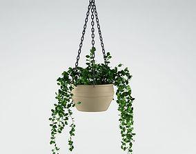 shrub Plant 3D model