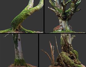 3D model Photogrammetry Tree Pack