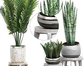 3D Potted plants Set 41