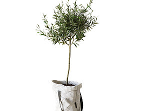 3D model Olive tree in bag