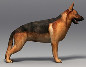 German Shepherd 19414 3D asset