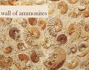 Wall of ammonites 3D