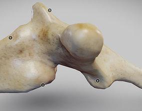 3D model Human Thoracic Vertebra