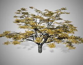 3D model Cherry Fall Tree
