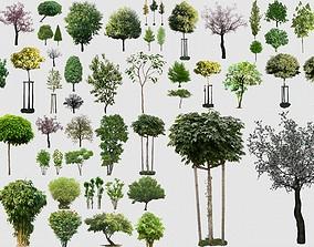 3D 2D PLANTS 50 PNG Pack 13