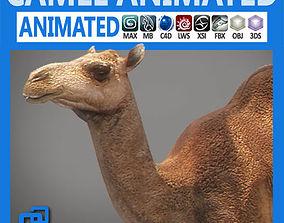 fbx 3D model Animated Camel