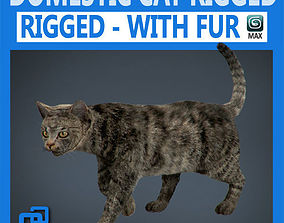3D Rigged Domestic Cat