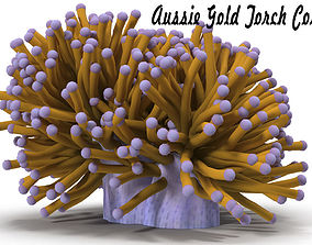 3D model Aussie Gold Torch Coral
