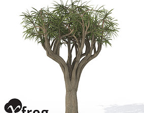 3D model XfrogPlants Tree Aloe