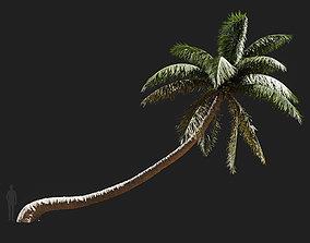 3D Cocos nucifera Coconut palm-06
