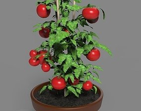 3D model Cherry tomato in a pot