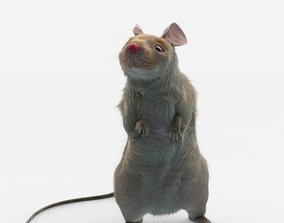 3D animated mouse rat