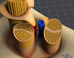3D model Nerve Anatomy