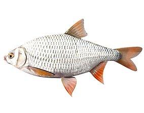 3D model Common Roach Fish Rutilus Rutilus