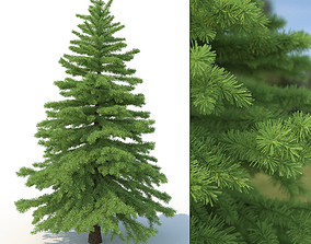 plants Spruce Tree No 2 3D