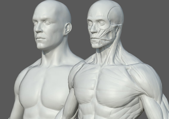Character - Male Female Anatomy Rigging Included High Poly