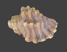 3D model Photoscanned Spiral Ridged Seashell